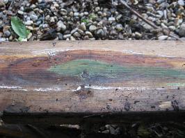 Green Mold on Board