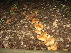 Row of Mushrooms