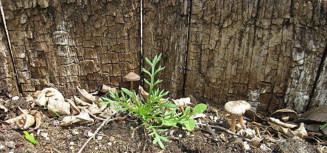 Tiny Mushrooms in Barrel